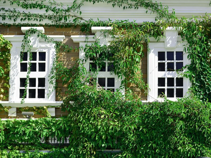 Sash Windows Highgate Restoration, Repair and Manufacture